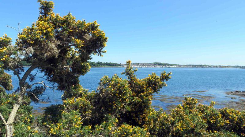 Grüne Bäume mit gelben Blüten vor einer Meeresbucht; im Hintergrund eine Stadt